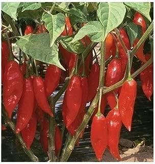 David's Garden Seeds Pepper Hot Habanero Paper Lantern 2343 (Red) 25 Non-GMO, Organic Seeds