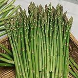 100 pezzi semi di asparagi inferiori pressur sangue, di frutta e verdura semi, bonsai piante Semi per la casa e il giardino di trasporto
