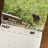 2021 Extraño Regalo Calendario,Calendario Pared De Perros Que Hacen Caca,Calendario De Perros Que Hacen Caca Para Regalo De Mordaza De La Fiesta Elefante Blanco,Regalo Para Alguien Que Ama Perros