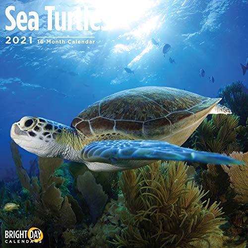 2021 Sea Turtles Wall Calendar by Bright Day, 12 x 12 Inch, Ocean Animals