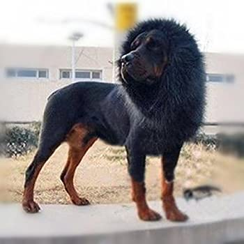 Lion Mane for Dog Pet Costume - FMJI Dog Clothes Lion Wig with Ears for Halloween Festival Party   Black