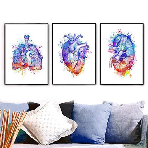 VVSUN Bunte Anatomie Lungenherz Niere Wandkunst Leinwand Malerei Nordic Poster und Drucke Wandbilder Ärzte Büro Dekor, 40x60cmx3Pcs (kein Rahmen)