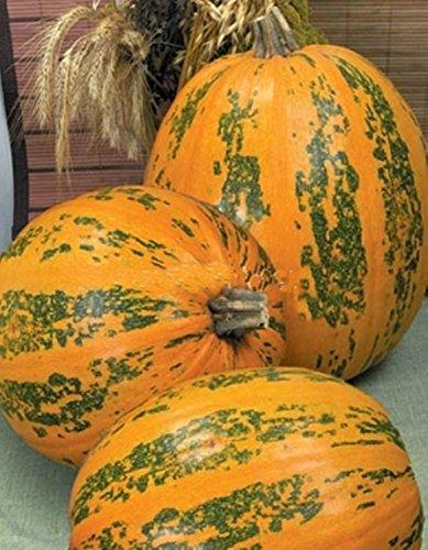 Seeds Pumpkin Ukrainskyy Bahatoplidnyy - Ukraine Multiple Organically Grown