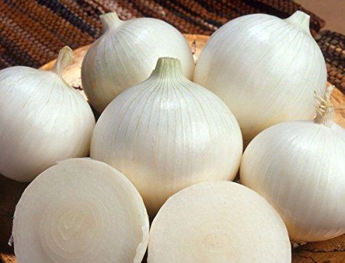 (Longue journée) oignon blanc doux espagnol 250 graines NON OGM Ez poussent CombSH I23