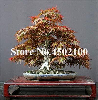Bloom Green Co. ¡Nueva llegada!Flor de hibisco gigante rojo flores Hermosa flor Bonsai Planta Jardín casero de DIY 50 pcs/paquete, 87LBFS: 15