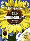 XXL- Sonnenblume King Kong Samen, Saatgut