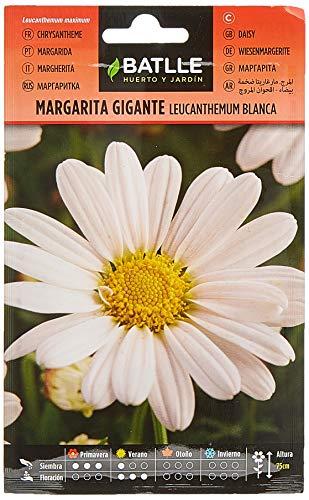 Semillas de Flores - Margarita Gigante Leucantemum blanca - Batlle