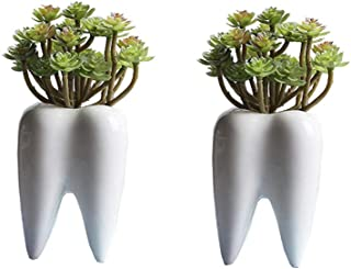 Youfui Tooth Home Decor Pot, Succulent Planter Plant Flowerpot Decor Toothbrush Holder for Home Office Desk (2pcs Funny Tooth Pots)
