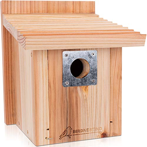 Wood Outdoor Garden Bird Feeding House Window Suction Cups Birdhouse Nest De HB