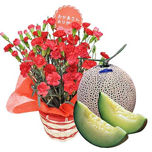 母の日 プレゼント カーネーション 鉢植え 5号鉢(赤)と アールス メロン セット プレゼント 用 ギフト ボックスでお届け