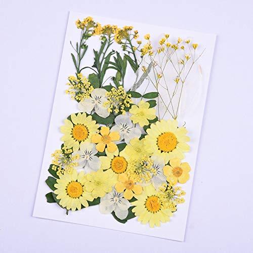 KONGZIR Presionado Flores pequeñas de Bricolaje Flores secas y litografías Seca Flor Preservada decoración del hogar Mini Flores de Flores secas (Color : 3)