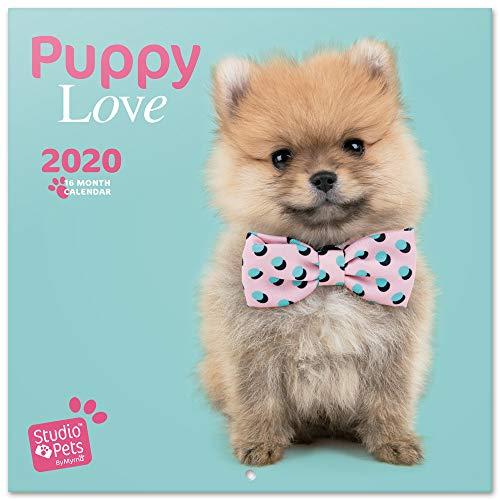 ERIK - Calendario de pared 2020 Studio Pets Puppies, 30 x 30 cm