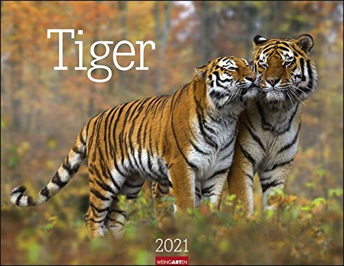 Tiger Kalender 2021