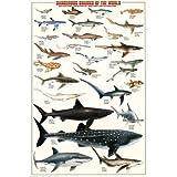 EuroGraphics Dangerous Sharks of The World Poster Print, 24x36
