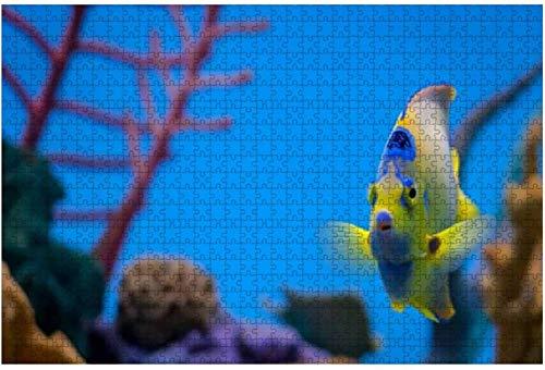 Hummer Unterwasser Marine Aquarium Fische Stock Bilder, Royalty Large 500 Stück Puzzles für Erwachsene Lernspielzeug für Kinder Kreative Spiele Unterhaltung Holzpuzzles Home Decor-PUZZLE4