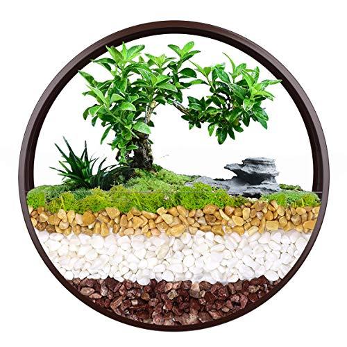 Vaso da appendere alla parete, vaso rotondo da parete in metallo, supporto geometrico da parete per piante, contenitore verticale per piante grasse, cactus, erbe e molto altro