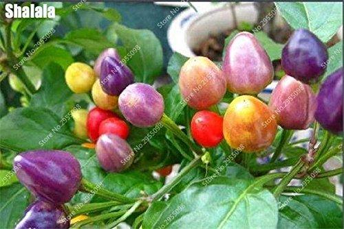 200pcs/sac arc-en-cerise poivre Graines Rare Spicy extérieur Bonsai Chili Chili légumes en pot plante facile à cultiver 7