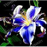 レインボーニンジンブレンドミックス、種子、カラフル、非Gmo、バラエティサイズ、(9500)
