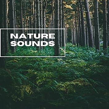 Nature Sounds - Forest Sunrise Sounds