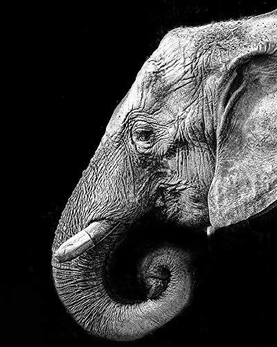 Flbyqv Kit de Pintura de Diamantes 5D,Elefante Blanco Negro Diamond Painting Bordado de estrás, Mosaico Pintura de Diamante decoración de Pared para el hogar(40x50cm)
