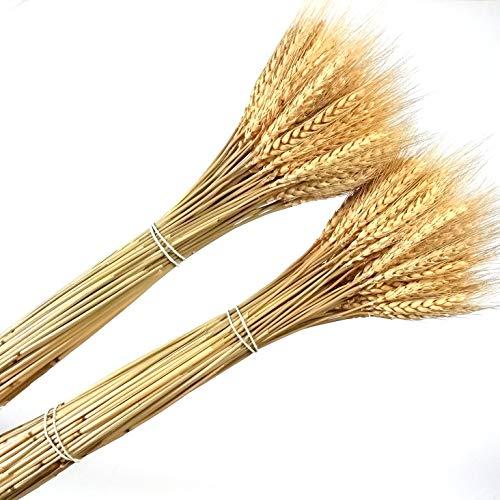 200 piezas seco natural trigo conjunto flor arreglos casa mesa boda fiesta centro piezas decorativo