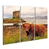 Bild auf Leinwand Highland Cow Loch linnhe schottland