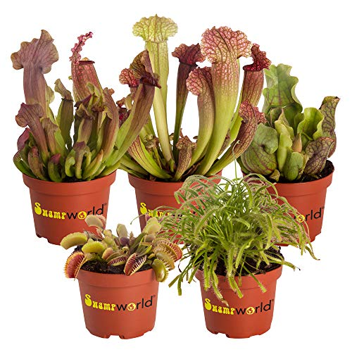 Swampworld Vleesetende planten Mix - 5 stuks - Ø 9 cm ?? 10-20 cm