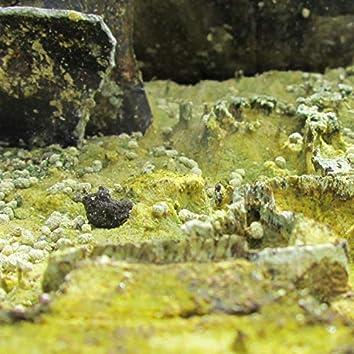 Caterpillar Caverns
