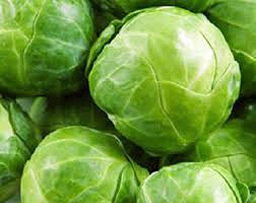 Choux de Bruxelles, Long Island semences améliorées, biologiques, sans OGM, 25+ graines par paquet, Bruxelles Becs sont super santé. Ils sont également faibles en calories.