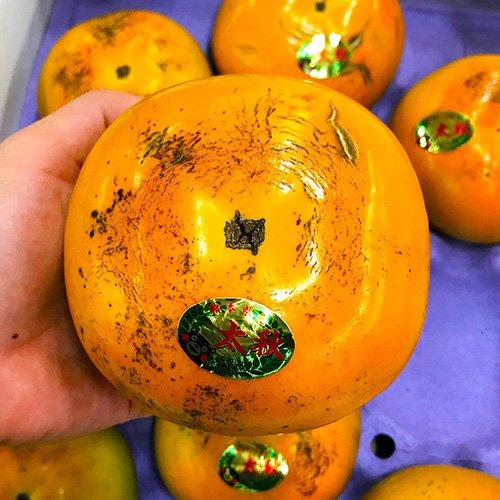 熊本産 太秋柿 高級品種 訳あり ご家庭用 箱込 約1kg前後