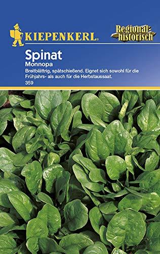Spinatsamen - Spinat Monnopa von Kiepenkerl