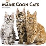 Maine Coon Cats - Maine Coon Katzen 2021 - 16-Monatskalender: Original BrownTrout-Kalender [Mehrsprachig] [Kalender] (Wall-Kalender)