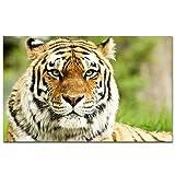 Pintura al óleo del paisaje del tigre salvaje de la selva moderna impresión de la lona arte pop animal imagen de la pared sala de estar sofá pintura decorativa sin marco moderna C29 60x90cm