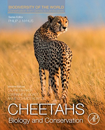 Cheetahs: Biology and Conservation: Biodiversity of the World: Conservation from Genes to Landscapes (English Edition)
