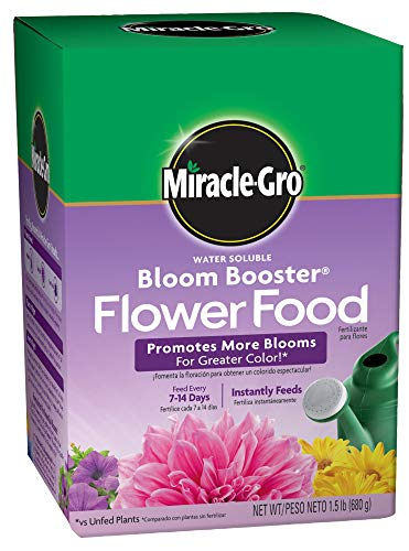 13 best flower food for fresh cut flowers packets for 2020