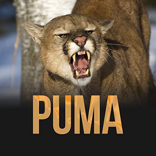 Puma Titelbild