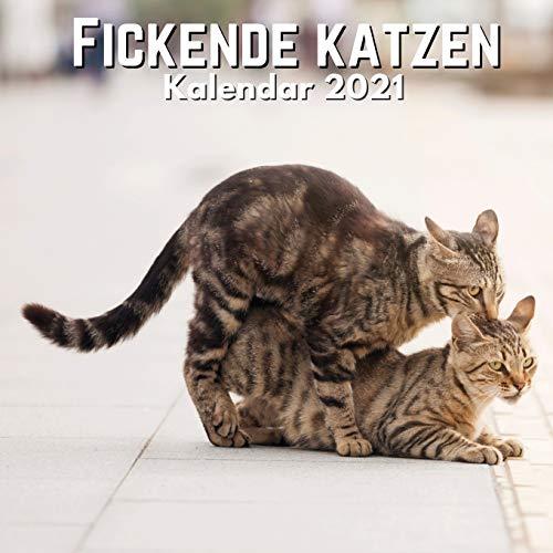 Fickende Katzen: Kalender 2021 Katze Lustig   Katzenliebhaber Geschenke - Frauen, Männer