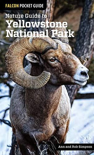 Nature Guide to Yellowstone National Park (Falcon Pocket Guides)