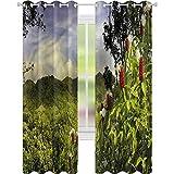 jinguizi Cortina opaca térmica aislante bosque paisaje rural Costa Rica W42 x L84 drapeado para puerta de vidrio