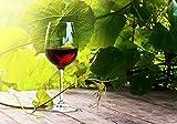 wandmotiv24 Fototapete Glas mit Rotwein im Weinberg M 250 x 175 cm - 5 Teile Fototapeten, Wandbild, Motivtapeten, Vlies-Tapeten Wein, Pflanzen M0830