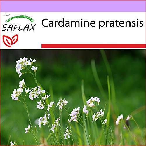 SAFLAX - Heilpflanzen - Wiesenschaumkraut - 100 Samen - Cardamine pratensis