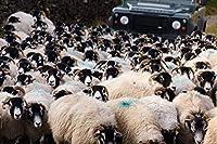 かわいい羊とカート120ピース木製ジグソーパズル家族向けプレイコレクションに最適