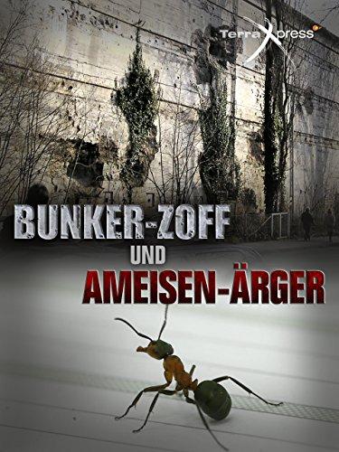 Bunker-Zoff und Ameisen-Ärger
