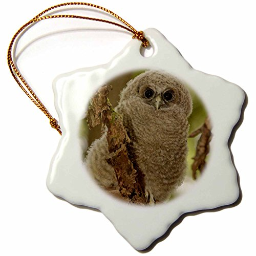 3dRose orn_93912_1 Oregon, Northern Spotted Owl US38 RBR0034 Rick A. Brown Snowflake Porcelain Ornament, 3-Inch