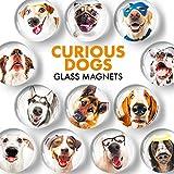 Fridge Magnets Funny Dogs – Glass Decorative Magnets for Fridge – Cute...