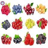 Elitely 30 stcke berry 12 arten von kstlichen berry obst rote himbeere Heidelbeere Semillas De Bayas Bonsai Samen Fr Zuhause & amp; Garde