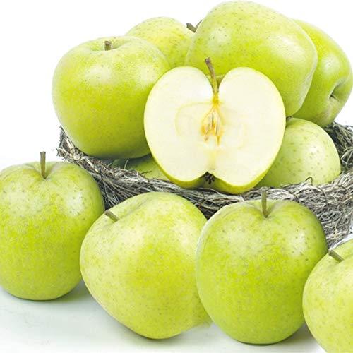 国華園 青森産 ご家庭用 王林 5�s 1組 りんご