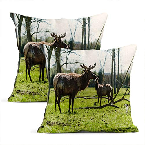 Zynii Pillowcase Elk with Transitioning Coat and Velvet Antlers Decorate Your Room and Living Room to Bring You Comfort as a Present