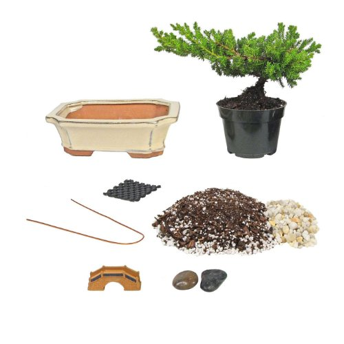 Eve's Bonsai Tree Starter Kit, Complete Do-It-Yourself Kit with 6 Year Old Japanese Juniper