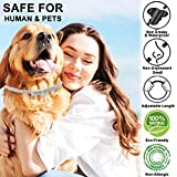 IMG-1 collare antipulci cane per cani